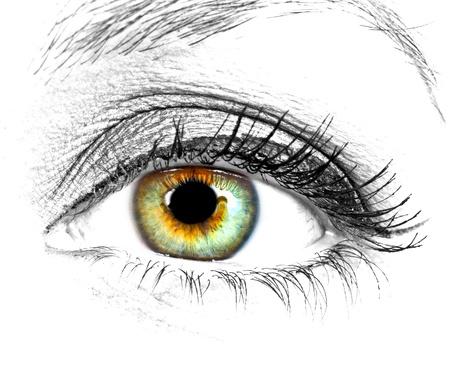 Ojo de mujer bella sobre fondo blanco Foto de archivo