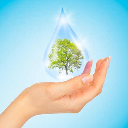 mineral water: Drop of water with Tree inside and human hand. The symbol of Save Green Planet