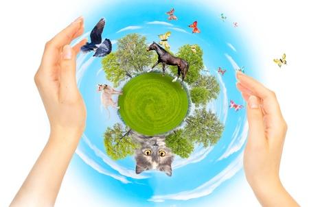 green planet: Naturaleza, ecolog�a y protecci�n de animales diferentes. El concepto de conservaci�n. Collage