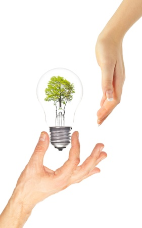 Hands and eco light bulb with tree inside on white. Eco concept photo