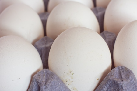 Ð¡lose-up Eggs in tray Stock Photo - 12350530