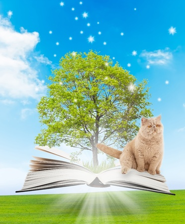 Magic book with a green tree, cat and the rays of light on the background of nature. Symbol of knowledge Stock Photo