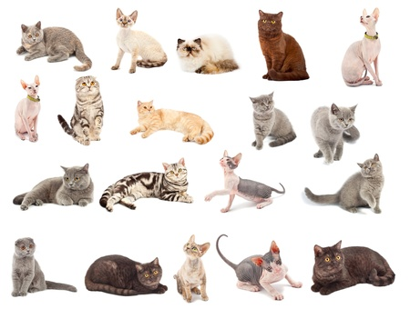 Collection of a cats in different poses isolated over white background photo