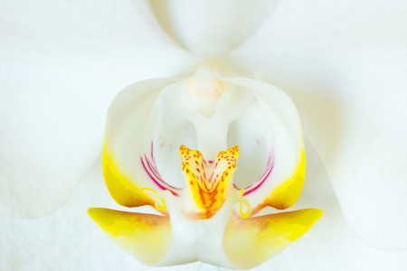 White Orchid close up photo