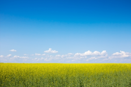 The field of flowers against the blue sky and white clouds photo