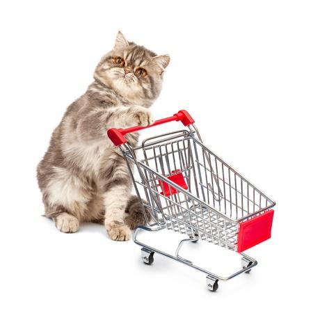 tienda de animales: Gato con una cesta en el fondo blanco Foto de archivo