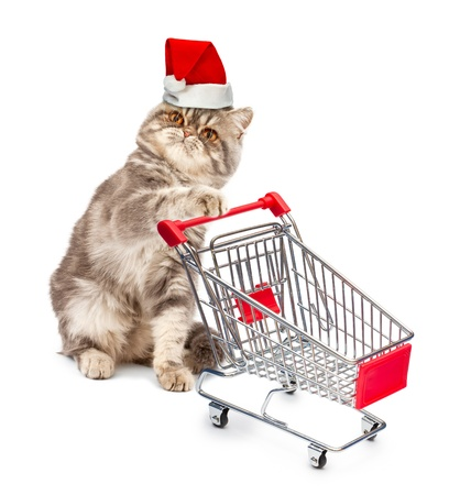 Cat in a Christmas cap with a cart on white background Stock Photo - 15821194