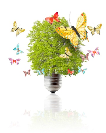 Green energy concept - green tree growing out of a bulb and butterflys Stock Photo