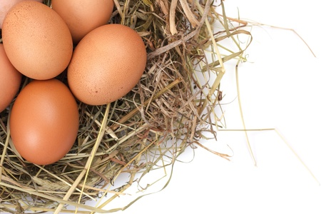 Brown eggs in a nest isolated on a white background Stock Photo