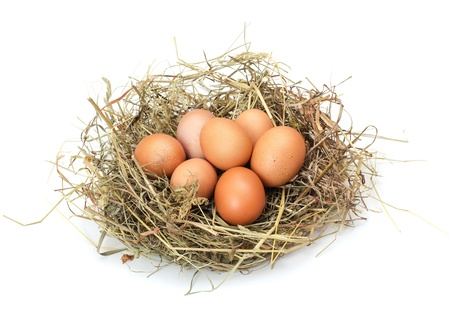 Brown eggs in a nest isolated on a white background photo
