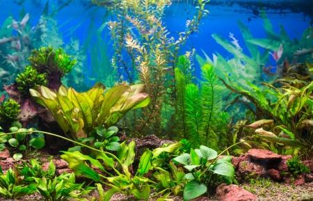 인테리어 수족관 녹색 식물 열대어 민물 수족관 스톡 콘텐츠