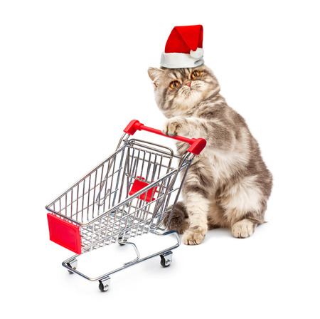 Cat in a Christmas cap with a cart on white  photo