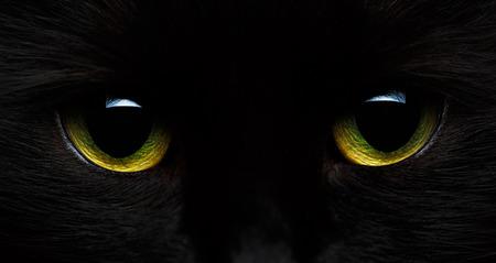 asustado: ojos de color verde amarillo de un gato negro en primer plano