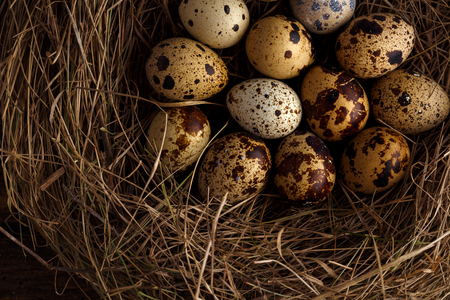 quail nest: Fresh quail eggs in a nest on a wooden rustic background Stock Photo