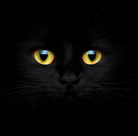 Mignon museau d'un gros chat noir