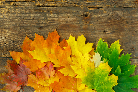 Red, yellow and green maple leaves on old wooden background; Autumnal motif