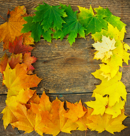 Autumn maple leaves falling frame on wooden background