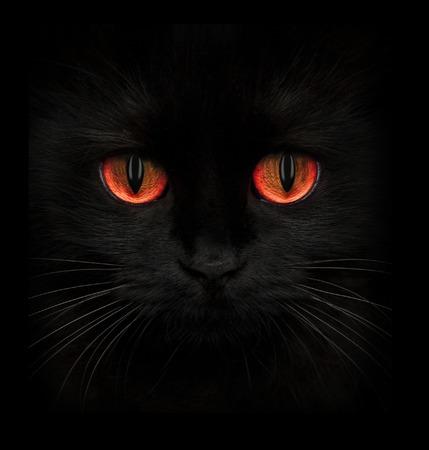 Terrible hocico de un gato negro con los ojos rojos de cerca