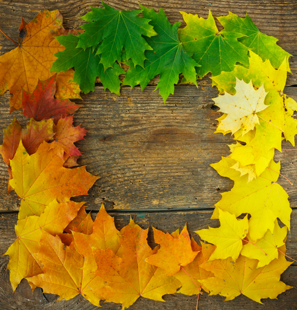 leaves falling: Autumn maple leaves falling frame on wooden background