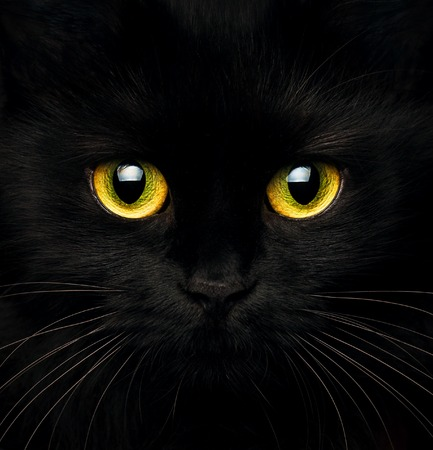 Cute muzzle of a black cat closeup