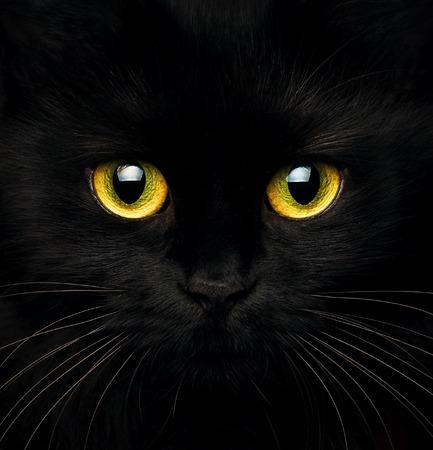 Nette Mündung einer schwarzen Katze Großansicht Standard-Bild - 66418694