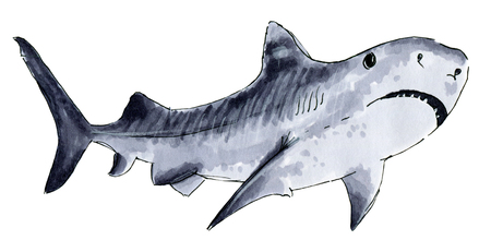 murderer: Painted markers shark on a white background