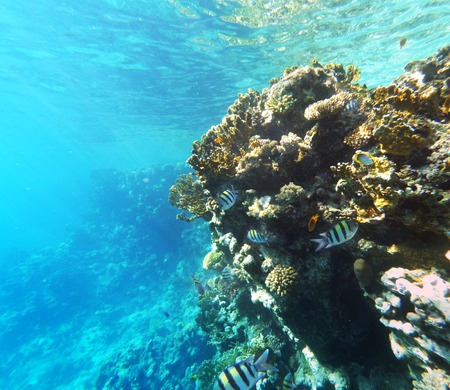 Coral and fishs in the Red Sea. Egypt, Africa Stock Photo