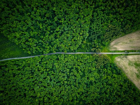 Road through the forest, view from height - aerial view