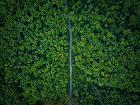 Camino a través del bosque, vista desde altura - vista aérea Foto de archivo - 81282810