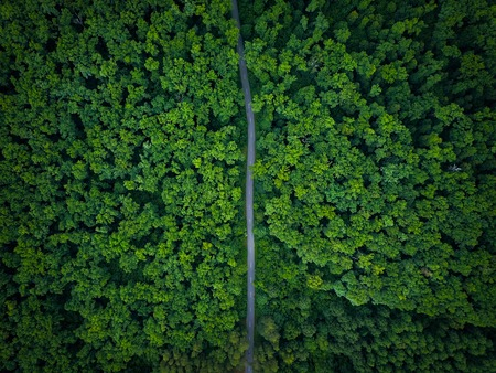 Weg door het bos, uitzicht vanaf de hoogte - luchtfoto