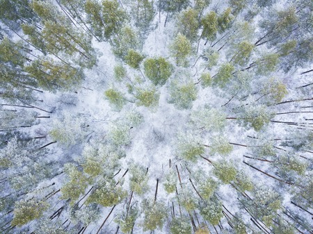 Aerial view of the winter forest covered with snow