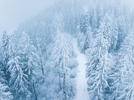 Aerial view on the coniferous forest in the mountains in winter. Heavy snow and blizzard, uncomfortable unfriendly winter weather. Stock Photo