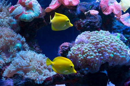 Bright colorful fish swim in the aquarium