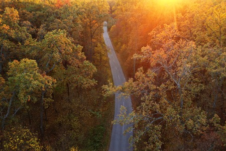 Aerial view of the road in the autumn forest at sunset. Bright yellow foliage