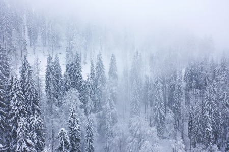 Aerial view on the coniferous forest in the mountains in winter. Foggy, uncomfortable unfriendly winter weather. Imagens