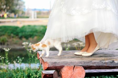 Cat marche sous la robe de mariée