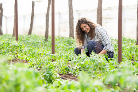 Female garden worker planting seedlings photo