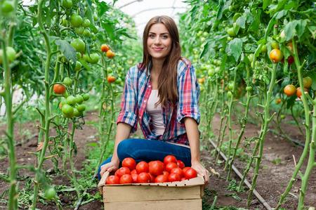 tomates: Jóvenes sonrientes trabajador agrícola mujer y un cajón de tomates en la parte delantera, trabajando, cosecha los tomates en invernadero. Foto de archivo