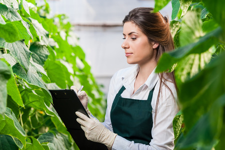 in the greenhouse: Portrait of a young woman at work in greenhouse,in uniform and clipboard in her hand . Greenhouse produce. Food production. Tomato growing in greenhouse.