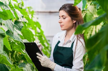 invernadero: Retrato de una mujer joven en el trabajo en el invernadero, en uniforme y el portapapeles en la mano. Productos de efecto invernadero. La producci�n de alimentos. Tomate que crece en invernadero.