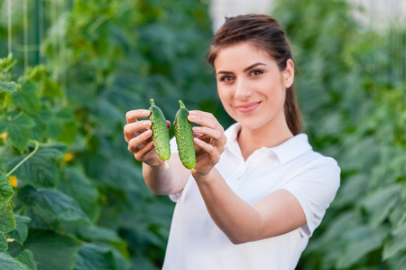 hothouse: Happy Young woman holding and eating cucumbers in a hothouse cultivated with green fresh cucumber plants.