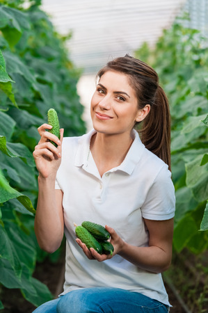 hothouse: Happy Young woman holding cucumbers in a hothouse cultivated with green fresh cucumber plants.