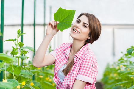 smiling woman in a greenhouse: Beautiful young woman gardening and smiling at camera in a greenhouse with cucumber plants