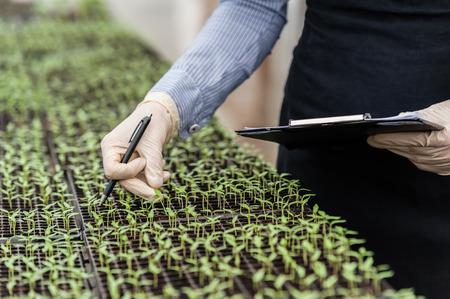 invernadero: Biotecnología Ingeniero de la mujer con un sujetapapeles y una pluma examen de una planta para la enfermedad!