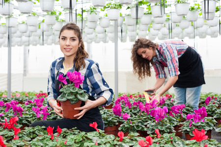 florists: Florists women working with flowers in a greenhouse.