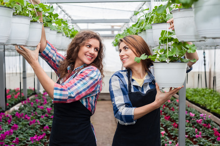 floriculture: Florists women working with flowers in a greenhouse.