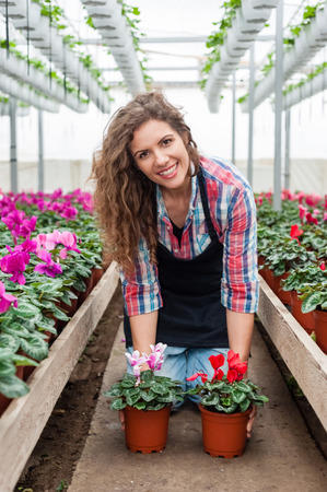 floriculture: Florist woman working with flowers in a greenhouse.