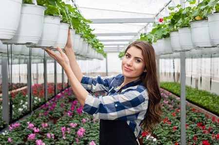 florists: Florists woman working with flowers in a greenhouse.