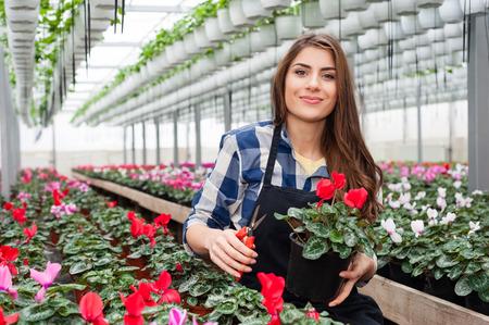 invernadero: Mujer de floristas de trabajo con las flores en un invernadero. Foto de archivo