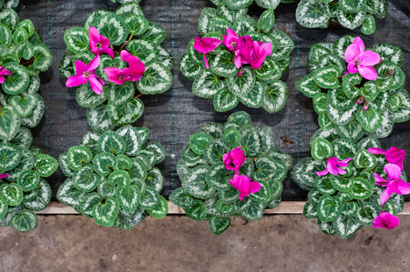 botanical garden: Flower culture in a greenhouse Stock Photo